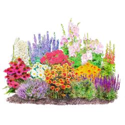 BCM Beetpflanze Landhausgarten Set, 12 Pflanzen