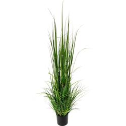 Kunstpflanze Gras im Topf Gras, I.GE.A., Höhe 165 cm grün