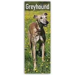 Greyhound 2021