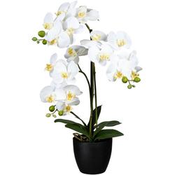 Kunstorchidee Phalaenopsis Orchidee Phalaenopsis, Creativ green, Höhe 65 cm weiß