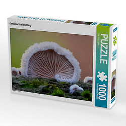 Gemeine Spaltblättling Lege-Größe 64 x 48 cm Foto-Puzzle Bild von Loi Ton That Quynh Puzzle