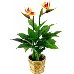 Kunstpflanze Strelitzienpflanze in Wasserhyazinthentopf Strelitzie, I.GE.A., Höhe 80 cm