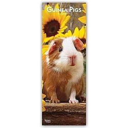 Guinea Pigs - Meerschweinchen 2021