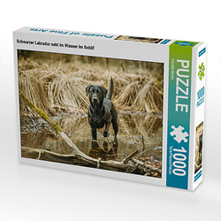 Schwarzer Labrador seht im Wasser im Schilf Lege-Größe 64 x 48 cm Foto-Puzzle Bild von Cornelia Strunz Puzzle