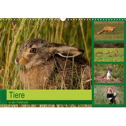 Tiere in der Feldmark (Wandkalender 2021 DIN A3 quer)