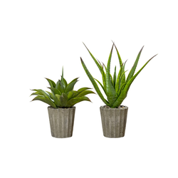 Boltze Topfpflanze Agave in grün, 50 cm