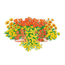 BCM Beetpflanze Sonnige Farben Set, 9 Pflanzen