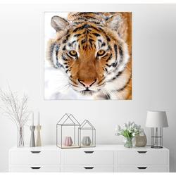 Posterlounge Wandbild, Sibirischer Tiger im Schnee 20 cm x 20 cm