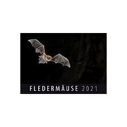 Fledermäuse 2021