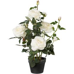 Künstliche Zimmerpflanze (1 Stück), Kunstpflanzen, 57887852-0 weiß H: 68 cm weiß