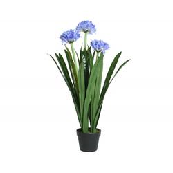 Kunstpflanze AGAPANTHUS(DH 74x96 cm)