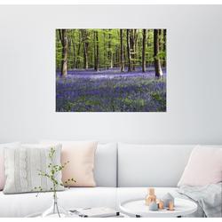 Posterlounge Wandbild, Glockenblumen im Wald 40 cm x 30 cm