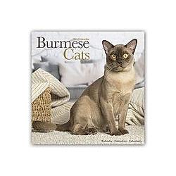 Burmese Cats - Burma Katzen 2021