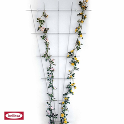 bellissa Rosenspalier Fächer zink-rip 120 x 60 cm Spalier Gitter Rank Hilfe Zaun