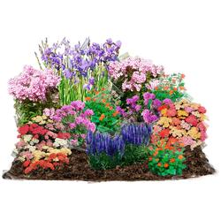 BCM Beetpflanze Pastell-Traum Set, 24 Pflanzen