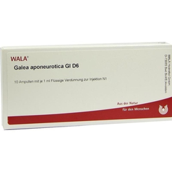 GALEA APONEUROTICA GL D 6