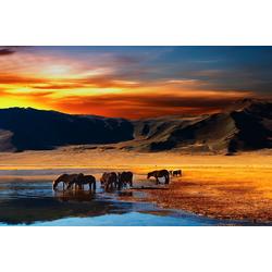 Fototapete Mongolian Horses, glatt 3,50 m x 2,60 m