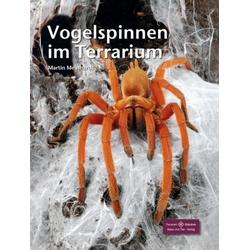 Vogelspinnen im Terrarium als Buch von Martin Meinhardt