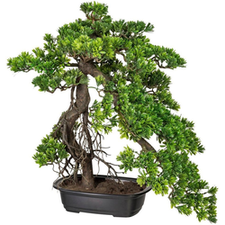Kunstbonsai Bonsai Podocarpus Bonsai, Creativ green, Höhe 55 cm