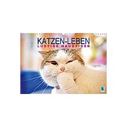 Katzen-Leben: Lustiger Haustiger (Wandkalender 2021 DIN A3 quer)