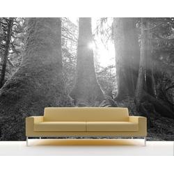 Bilderdepot24 Deco-Panel, Fototapete - Regenwald bunt 130 cm x 100 cm
