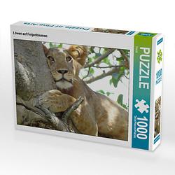 Löwen auf Feigenbäumen Lege-Größe 64 x 48 cm Foto-Puzzle Bild von Flori0 Puzzle