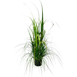 Kunstpflanze Gras im Topf, Höhe 120 cm