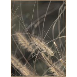 Poster MELLOW GRASSES 2 (BH 50x70 cm)