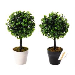 Buchsbaum im Blumentopf - 23cm Buchs