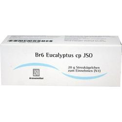 Br6 Eucalyptus cp JSO