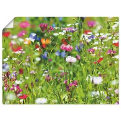Artland Wandbild Blumenwiese I, Blumenwiese (1 Stück) 120 cm x 90 cm