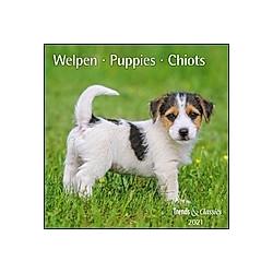 Welpen / Puppies / Chiots 2021