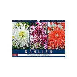 Dahlien - Prachtvolle Blüten des Spätsommers (Wandkalender 2021 DIN A4 quer)