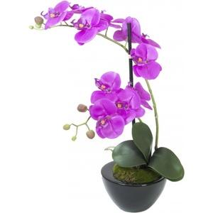 EUROPALMS Orchideen-Arrangement 4
