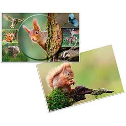 HERMA Schreibtischunterlagen   Waldtiere