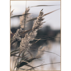 Poster MELLOW GRASSES 3 (BH 50x70 cm)