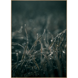 Poster MELLOW GRASSES 5 (BH 70x100 cm)