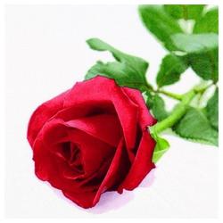 Linoows Papierserviette 20 Servietten, Edle Rote Rose, Die Königin der, Motiv Edle Rote Rose, Die Königin der Blumen