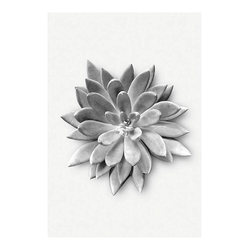 KOMAR XXL Poster Succulent Agave bunt