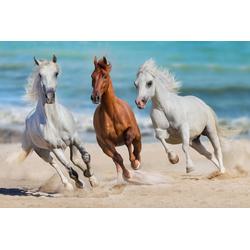 Papermoon Fototapete Horse Herd Run Gallop, glatt 3 m x 2,23 m
