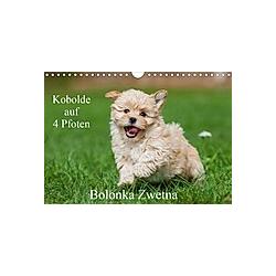 Kobolde auf 4 Pfoten - Bolonka Zwetna (Wandkalender 2021 DIN A4 quer) - Kalender