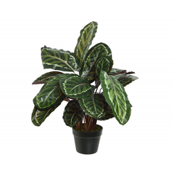 Kunstpflanze CALATHEA (H 69 cm)