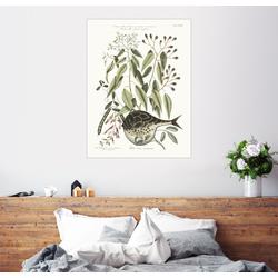 Posterlounge Wandbild, Kugelfisch und Bohnenpflanze 60 cm x 80 cm