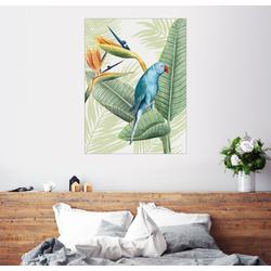 Posterlounge Wandbild, Blauer Halsbandsittich 100 cm x 130 cm