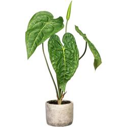 Künstliche Zimmerpflanze Anthurie Anthurie, Creativ green, Höhe 60 cm, im Zementtopf