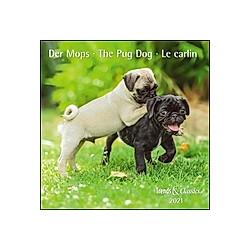 Der Mops / The Pug Dog / Le carlin 2021