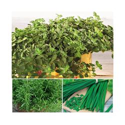 Volmary Gewürzkraut BBQ Mix Kräuter, Höhe: 25 cm, 3 Pflanzen
