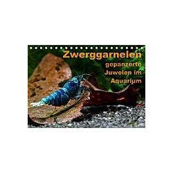 Zwerggarnelen - gepanzerte Juwelen im Aquarium (Tischkalender 2021 DIN A5 quer) - Kalender