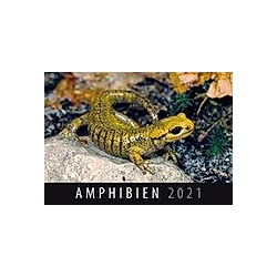 Amphibien 2021 - Kalender