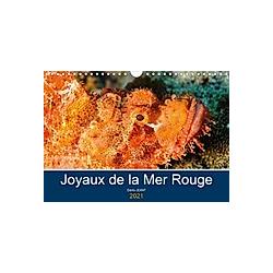 Joyaux de la Mer Rouge (Calendrier mural 2021 DIN A4 horizontal)